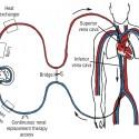 traodoioxy